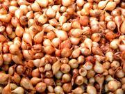семена лука севка ,  арпажик